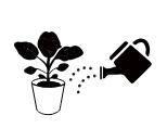 プランター栽培