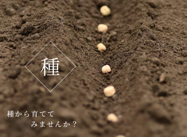 プランター栽培 種から育ててみませんか?